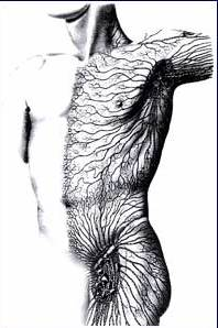 Lymphatic System. Graphic by The Chikly Health Institute